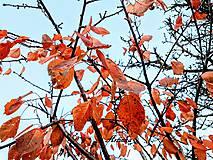 Fotografie - Foto - listy - 11251681_
