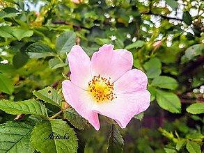 Fotografie - Foto - kvety - 11251573_