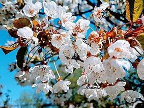 Fotografie - Foto - kvety čerešne - 11251739_