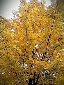 Fotografie - Foto - stromy - 11251757_