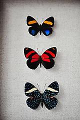 Obrázky - motýle v rámčeku - 11253980_