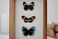 Obrázky - Pestrofarebné motýle v rámčeku - 11254015_