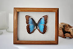 Obrázky - motýľ v rámčeku - 11254066_