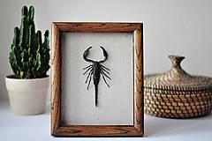Obrázky - škorpión v rámčeku - 11254131_