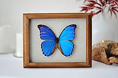 Obrázky - motýľ v rámčeku - 11254179_