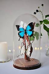 Dekorácie - motýle v sklenenej kupole - 11254218_
