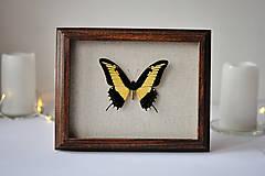 Dekorácie - motýľ v rámčeku - 11254244_