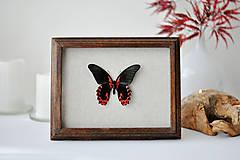 Obrázky - motýľ v rámčeku - 11254264_