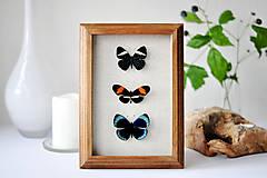 Obrázky - Pestrofarebné motýle v rámčeku - 11254286_