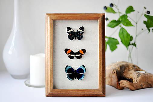 Pestrofarebné motýle v rámčeku