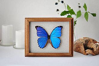 Obrázky - motýľ v rámčeku - 11254183_