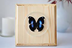 Obrázky - motýľ na drevenej podložke - 11254742_