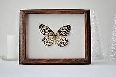 Obrázky - motýľ v rámčeku - 11257966_