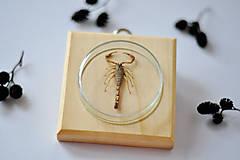 Obrázky - škorpión na podložke - 11258607_