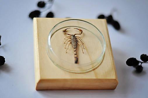 škorpión na podložke
