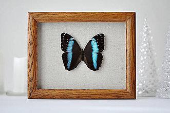 Obrázky - motýľ v rámčeku - 11260616_