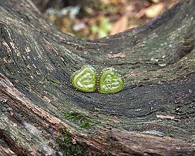 Náušnice - Srdiečka kovové 8 mm (zelené) - 11267753_
