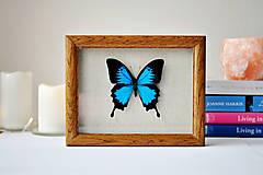 Obrázky - motýľ v rámčeku - 11263177_