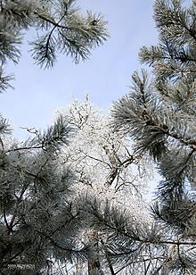 Fotografie - Fotografia - Srieň na stromoch. - 11285366_