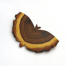 Odznaky/Brošne - Drevená brošňa - motýľ agátový - 11284061_