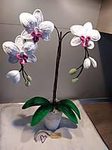 Dekorácie - Orchidea - 11285910_