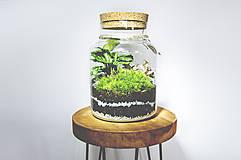 - Rastlinné terárium - 11287190_
