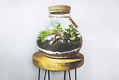 Nádoby - Rastlinné terárium - 11287247_
