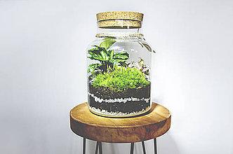 Nádoby - Rastlinné terárium - 11287190_