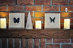Obrázky - Urania leilus- motýľ na drevenej podložke - 11286330_