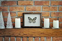 Obrázky - Idea leuconoe- motýľ v rámčeku - 11286356_