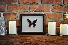 Obrázky - motýľ v rámčeku - 11286417_