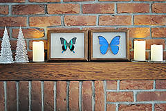 Obrázky - motýľ v rámčeku - 11286432_