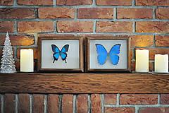 Obrázky - motýľ v rámčeku - 11286433_