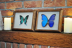 Obrázky - motýľ v rámčeku - 11286436_