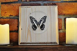 Obrázky - Papilio demodocus- motýľ na drevenej podložke - 11285624_