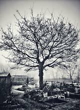 Fotografie - V záhradách - 11293073_