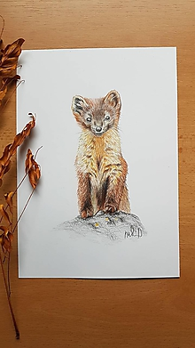 Kresby - Kresba:lasička - 11299365_