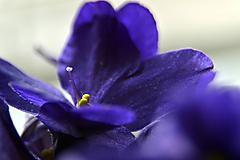 Fotografie - fialová nádej - 11308903_