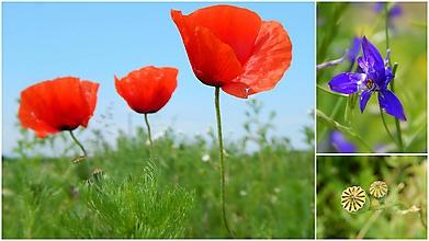 Fotografie - Lúčne krásky - 11314200_