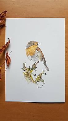 Kresby - Kresba:Vták Červienka - 11312101_