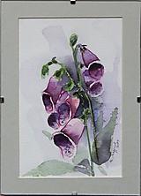 Obrázky - Náprstník - 11316643_