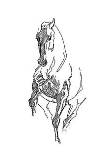 Grafika - kolekcia koní v pohybe - 3 kusy - 11328903_