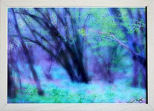 Obrazy - Sen v lese - 11326679_