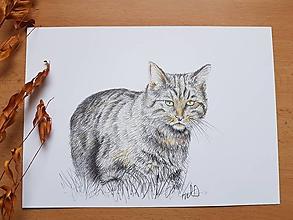 Kresby - Kresba:Mačka divá - 11325729_