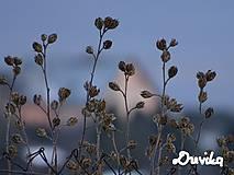Obrazy - Bylinky na plátne - 11330599_