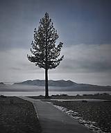 Obrazy - Sám pri jazere - 11334191_