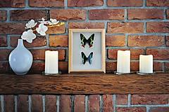 Obrázky - Urania ripheus/ Urania leilus - motýle v rámčeku - 11349367_
