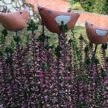 Dekorácie - Vtáčiky - sada zapichovačov do kvetináča - 11353799_