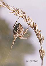 Fotografie - Pavúk na zavesenie - 11352076_