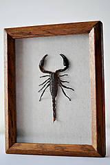 Obrázky - škorpión v rámčeku - 11371336_